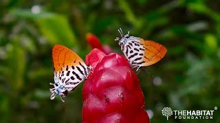 BiodiverCity - Malaysian Butterflies and Their Conservation