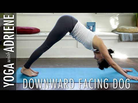 hatha yoga for beginners  fitbodyhq