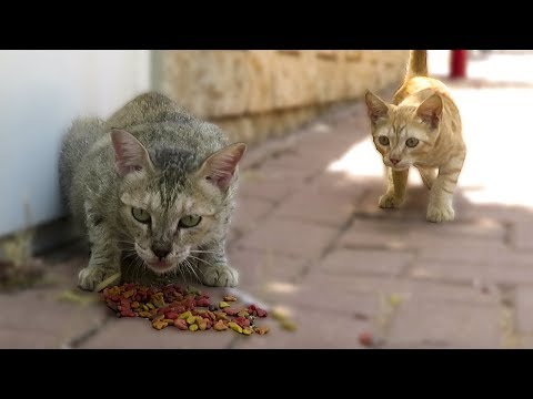 Kittens Meowing For Mom But Look What Happened..