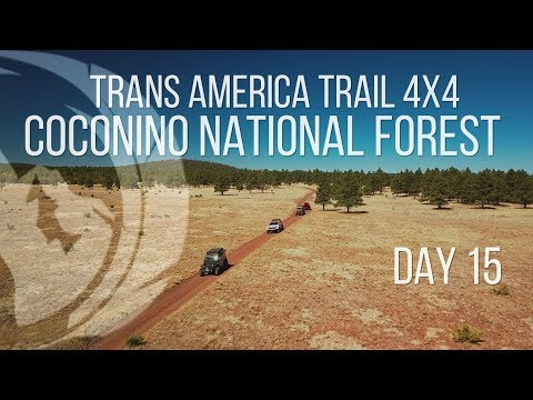 Coconino National Forest | Trans America Trail 4x4 Overland | Day 15