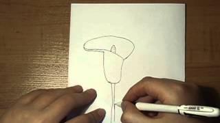 Как нарисовать цветок Кала №12(В этом видео я покажу как нарисовать цветок под названием кал. Подписывайтесь на канал и ставьте лайки., 2014-03-16T11:39:50.000Z)