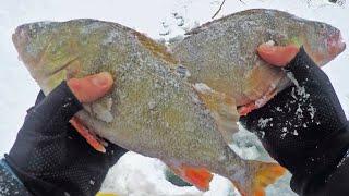 БЫЛО ТРУДНО, НО МЫ ДОБРАЛИСЬ ДО КРУПНЫХ ОКУНЕЙ! Зимняя рыбалка как она есть!