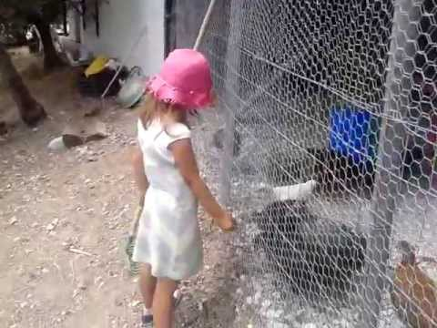 Το κοτετσι του ΚΑΛΚΟΥΝΗ [chiken coop]