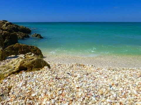 Collecting Seashells In Clear Captiva Gulf