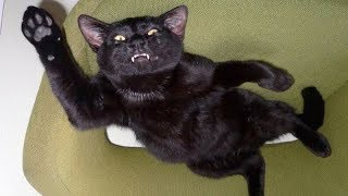 FUNNY ANIMALS, the ultimate TRY NOT TO LAUGH challenge - Funny ANIMAL compilation