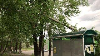 В Верхней Салде сильный ветер повалил деревья
