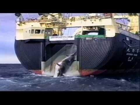 One World Ocean Promo