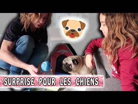 SURPRISE POUR LES CHIENS  🐶 / Family vlog