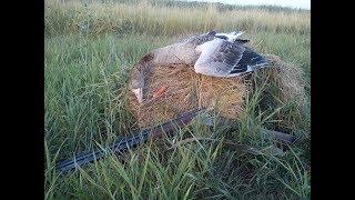 Охота на гуся с подхода 2017
