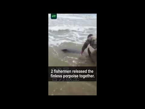 Chinese fishermen rescue a stranded Yangtze finless porpoise