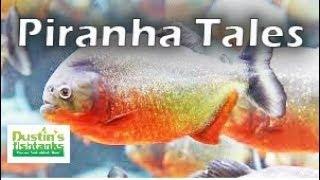 Dustin's Piranha Story...