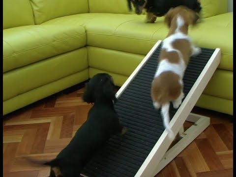 dog-ramp-product-review