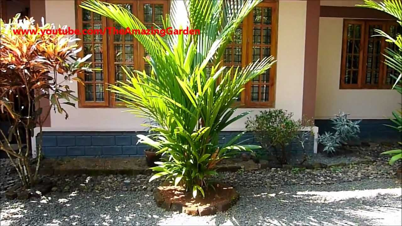 how to grow red palm tree