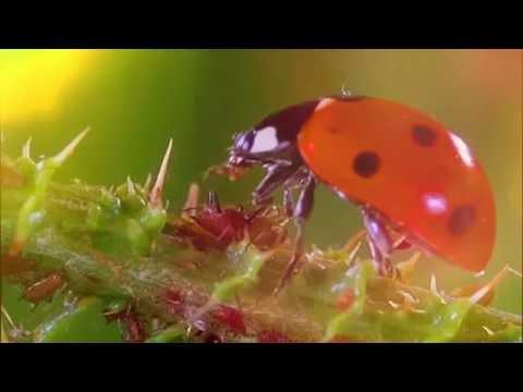 Microcosmos (le peuple de l'herbe) Piano