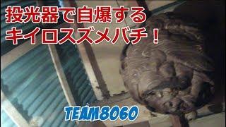 【悲惨】投光器で自爆するスズメバチ!【三重県伊賀市】 thumbnail