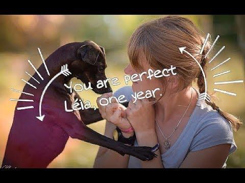 Léïa, You are perfect [One year Dog Tricks]