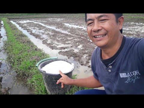 Mengapa Tanah Pertanian Sekarang Sakit Dan Bagaimana Solusinya?