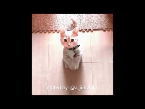 Eta Terangkanlah (Parodi Kucing)