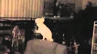 Танцующий попугай видео клип скачать бесплатно можно здесь видео клип скачать(, 2012-04-01T09:18:16.000Z)
