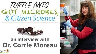Turtle Ants, Gut Microbes, & Citizen Science | Interview w/ Dr. Corrie Moreau