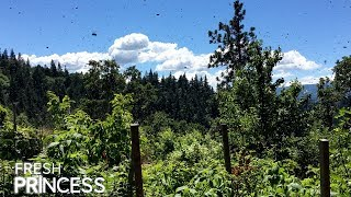 Caught on Video: THOUSANDS of Bees Swarming!   |  Fresh P