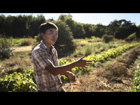San Francisco: Namu Gaji Natural Farm | Final Straw Documentary Short Takes