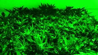 A quick way to fight humidity in your indoor grow(, 2015-10-11T17:40:19.000Z)
