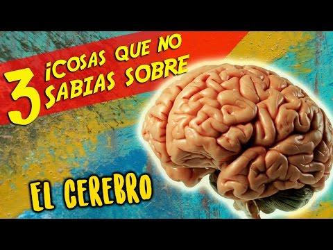 Top 3 - EL CEREBRO - 3 Cosas Que No Sabias - Cuerpo Humano - Ciencia