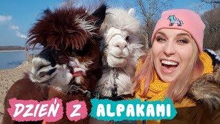 Wyprowadzam ALPAKI na spacer!  - Smakuj Życie #11 | Agnieszka Grzelak Vlog