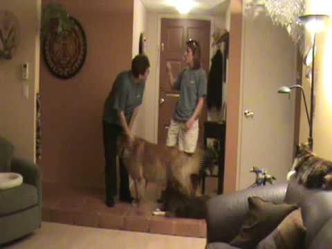 Door Dashing Pt 1 Dog Training Tips From Villa La Paws