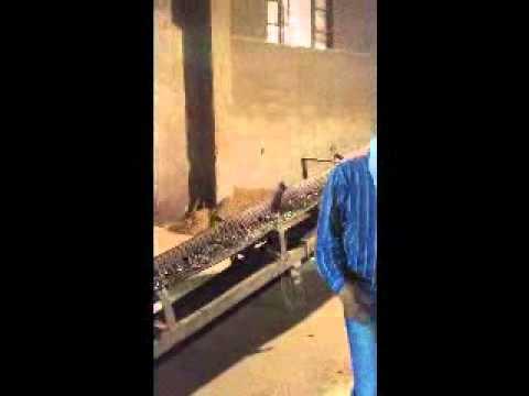 wood pellet mill installed in Qingdao