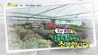 [전국시대] 국내 최대! 다육이 식물원을 소개합니다! (여수 다육식물원)