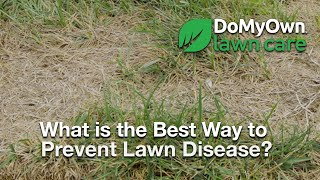 What is the Best Way to Prevent Lawn Disease? - Lawn Care Tips