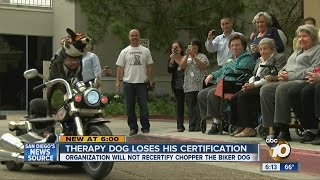 Therapy Dog Loses His Certification Over What He Wears
