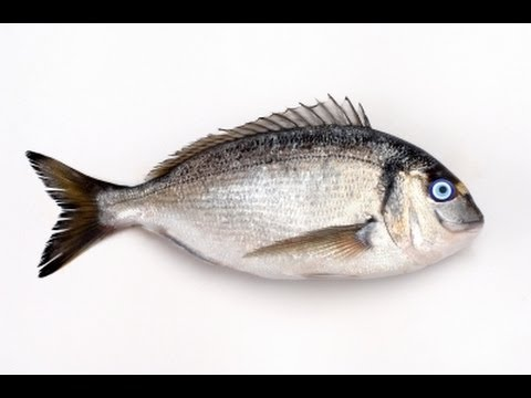 Mercury Levels In Fish/Seafood Revealed!!