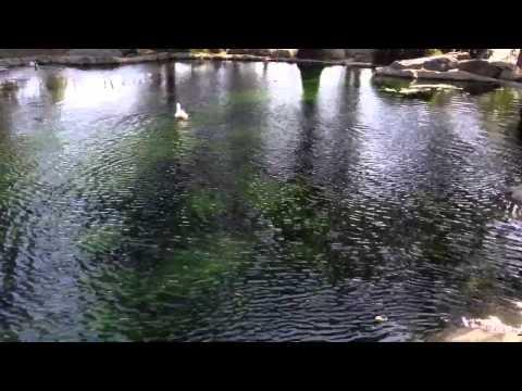 Kenneth Hahn Park Waterfall