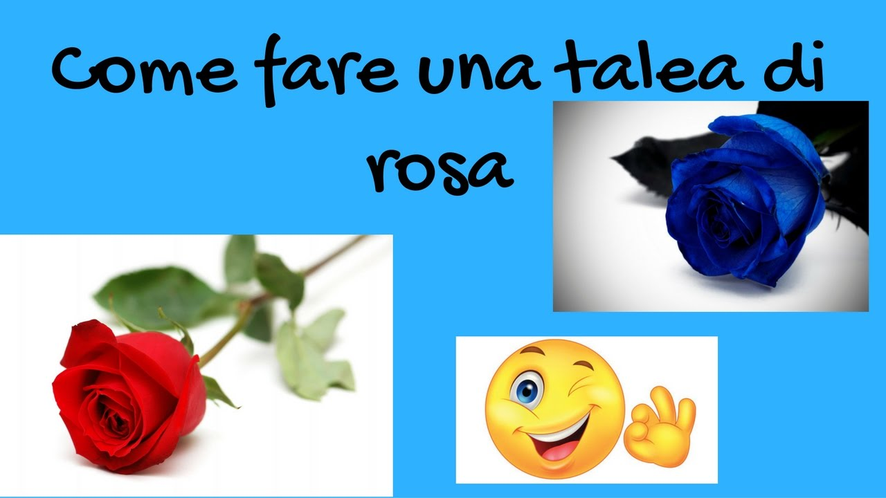 Come fare una talea di rosa youtube for Quando si piantano le rose