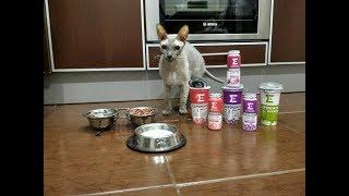 Смотри как кот выбирает корм. Felix (Феликс) или Friskis (Фрискис)?