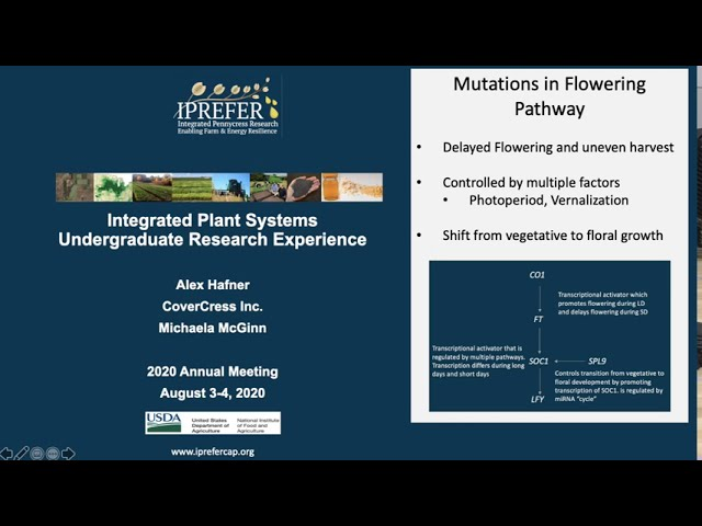 Alex Hafner: IPREFER 2020 Integrated Plant Systems – Undergraduate Research Experience Presentation
