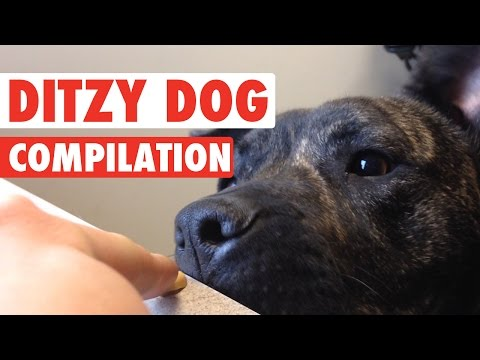 Funny Ditzy Dogs Pet Video Compilation 2016