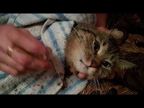 Лечение Кота Сени от мочекаменной болезни! Как давать таблетки коту если кот их не пьёт!
