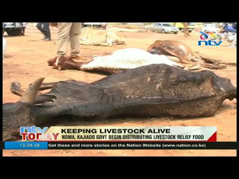 National Disaster Management Authority begins livestock relief food distribution