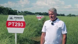 Demo Farma Grodkowice- omówienie odmian PT293, PT297 rzepaku ozimego marki Pioneer