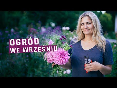 Ogród We Wrześniu. Jakie Prace Wykonać W Ogrodzie We Wrześniu- Trawnik, Nawożenie, Cięcie.