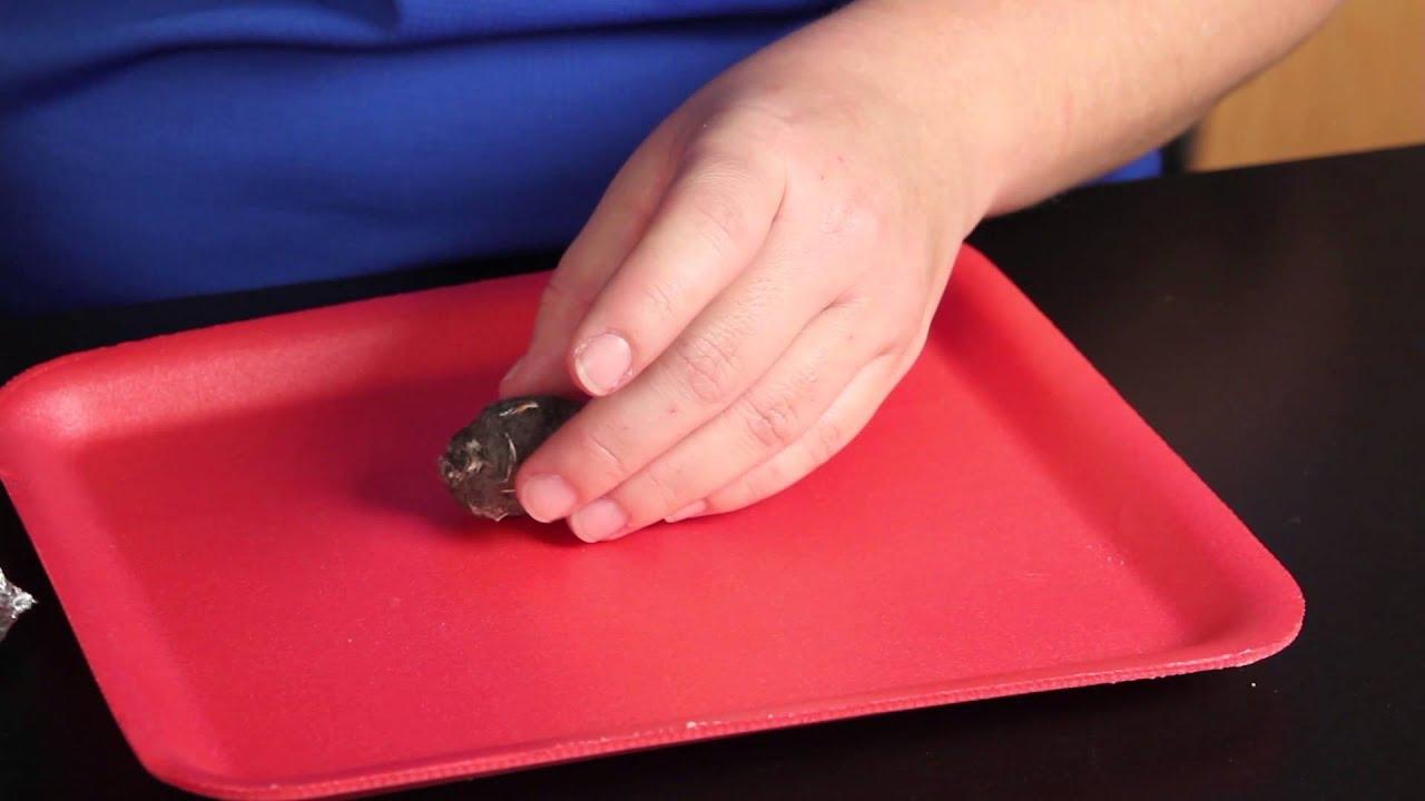 Carolina Quick Tip®: Owl Pellet Dissection - YouTube