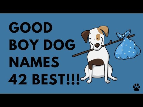 Good Boy Dog Names - 42 AMAZING IDEAS!!! | Names