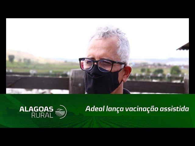 Adeal lança vacinação assistida contra a febre aftosa