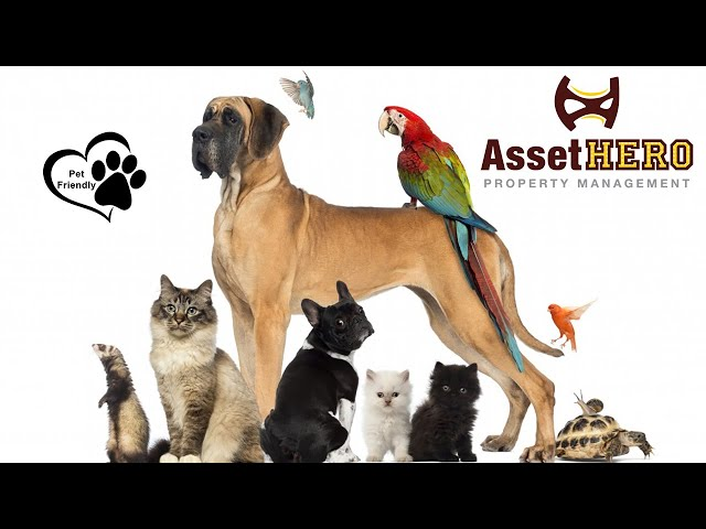 Why Being Pet Friendly is Important   Asset Hero Property Management