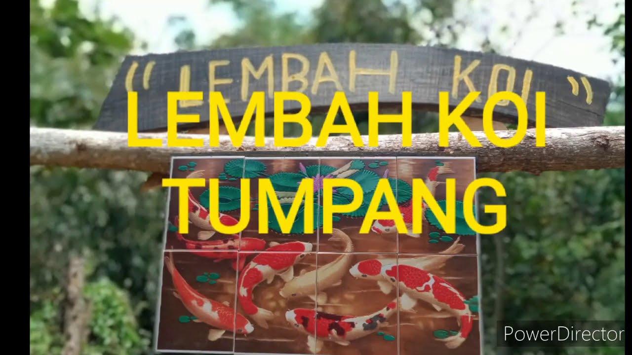 budidaya ikan koi di tempat wisata lembah koi desa tumpang ...