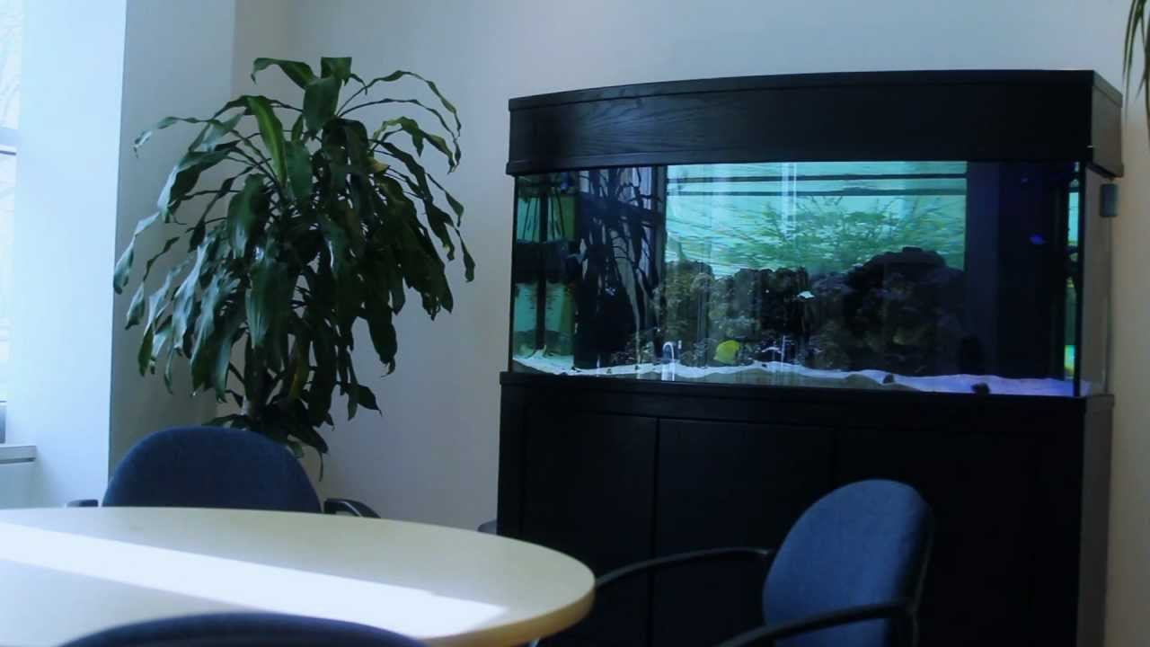 90 gallon oceanic bow front aquarium 1000 aquarium ideas for Oceanic fish tanks
